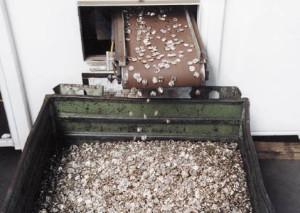 Euro_Bargeld_muenzentwertungsmaschine